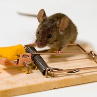 Less than half of metro housing's pest control budget spent on hiring pest control companies