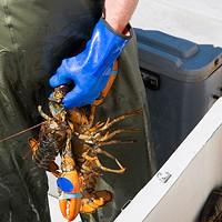 5 ways Halifax restaurants can show solidarity with Mi'kmaq lobster fishers