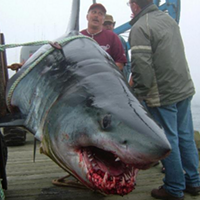 Yes, this giant shark was caught off the coast of Nova Scotia