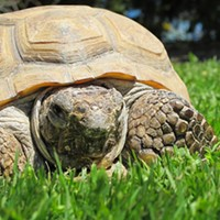 The tortoise and the hairball