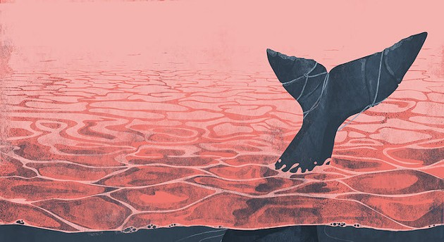 widewhale.jpg