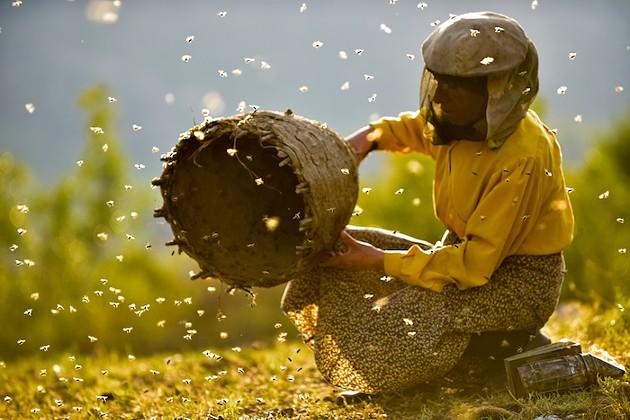 Equal part environmental rally cry and slice-of-life story, Honeyland shares the story of Europe's last female wild bee keeper. - VIA HONEYLANDFILM.COM