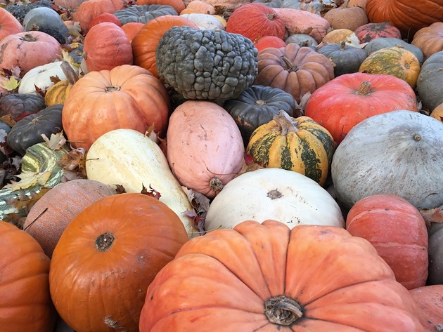 The province is squashing plans for huge Thanksgiving gatherings, but it can't keep a gourd pun down. - STOCK PHOTO
