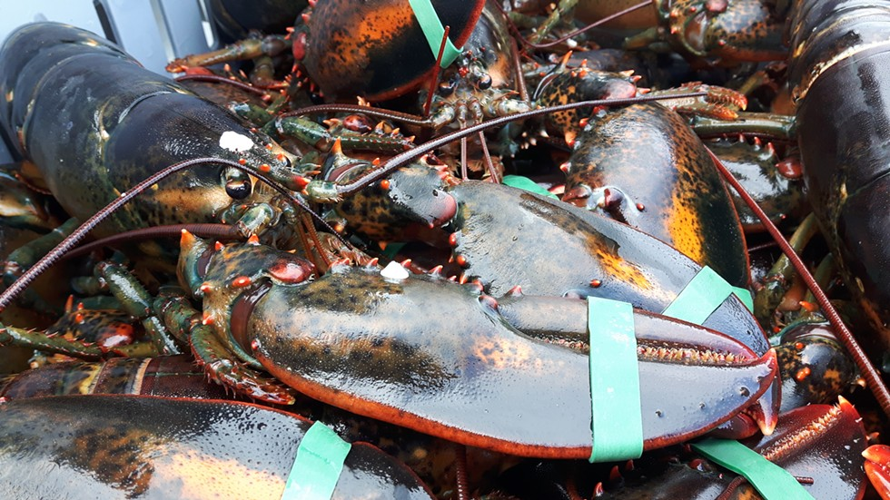 Lobster was once a poor person's food. It was used for fertilizer, fish bait and was fed to prisoners. Now it's considered a delicacy and has become a billion-dollar industry in Nova Scotia. - STEFAN SINCLAIR-FORTIN