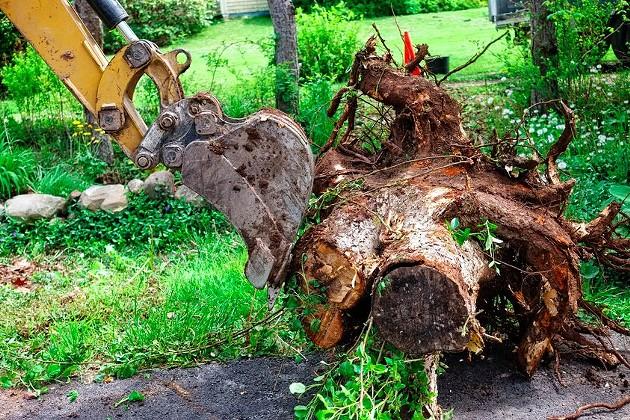 It's time to stump the (municipal) yard. - VIA ISTOCK