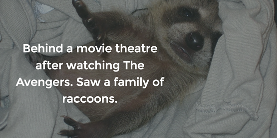 racoon.png