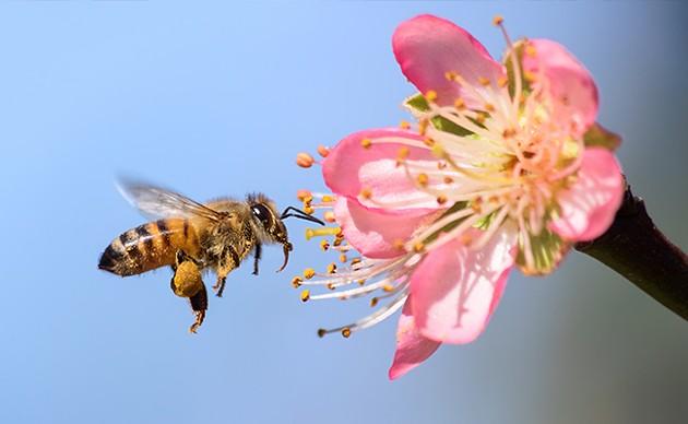 Bees? - ISTOCK