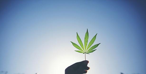 The amnesty agenda for cannabis