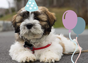 Puppy showers a great  gift to new dog owners