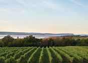 Nova Scotia wine's time to shine