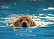 Get ready for doggy paddles at the Dartmouth Sportsplex
