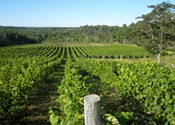 Thinking outside the vines