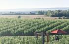 Warner Vineyards—Nova Scotia's grape god