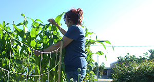 Getting urban garden projects off the ground is a challenge for local groups