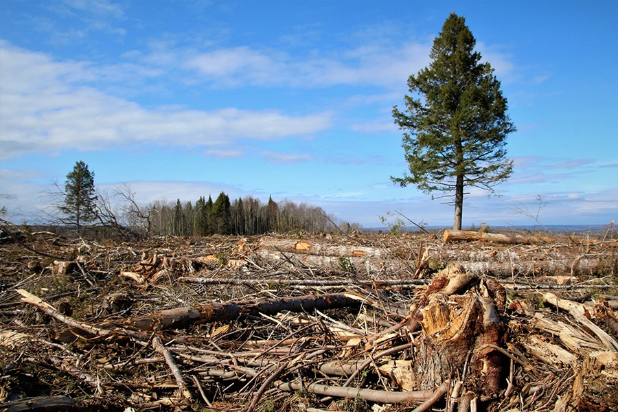 A woodlot without lots of wood. - ECOLOGY ACTION CENTRE