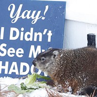 """The current """"Sam,"""" as pictured in his home at the Shubenacadie Wildlife Park."""