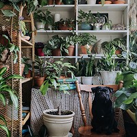 House Full of Plants' secret garden