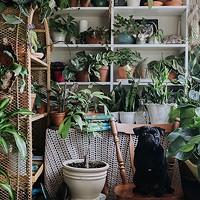 House Full of Plants' secret garden