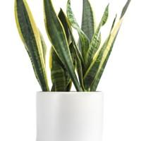 Expert advice: Three forgiving house plants