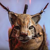 Nocturne 2018: Fox Hatch