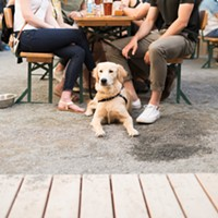Pups and pints on patios will now be a common occurrence across the province. RYAN WILLIAMS