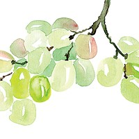 Five new-to-Nova-Scotia grape varieties