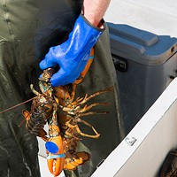 The Donald Marshall decision and Digby's lobster wars
