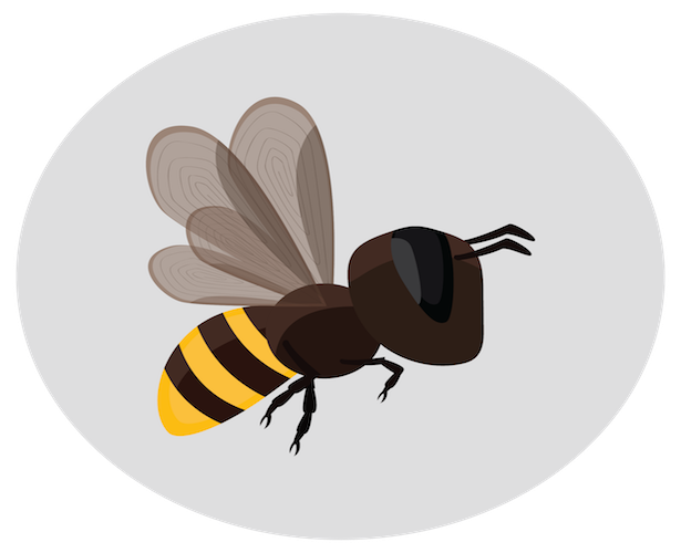 This is not a murder hornet—just a humble bee that deserves your attention and care.
