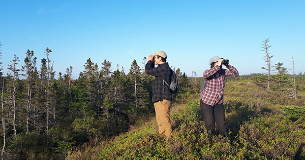 Bird research at Owls Head Provincial Park. NICOLE TOMASIC