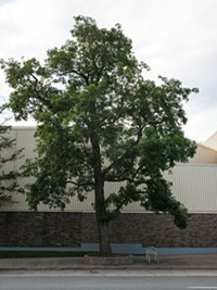 "4. Robinia outside the Canadian Tire on Quinpool Road. ""You can change the world around me, but you cannot change me."""