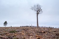 Clearcutting our losses