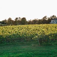 A fall wine to-do list