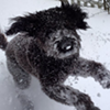 Here are some pics of pets in the snow