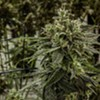 Dealer's choice: Nova Scotia launches public cannabis consultation
