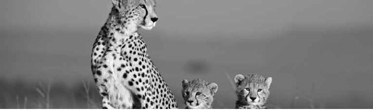 african_cats.jpg