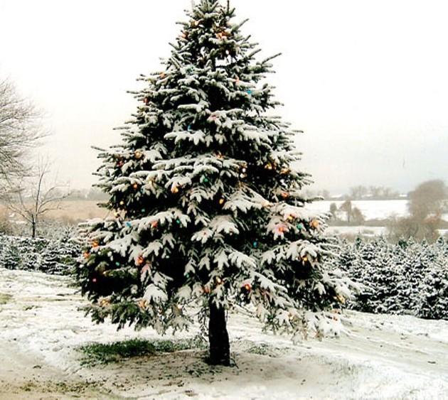 christmas_tree_06.jpg