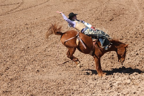 A Day At The Rodeo The Range The Tucson Weekly S Daily Dispatch