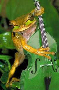 bassfrog_jpg-magnum.jpg