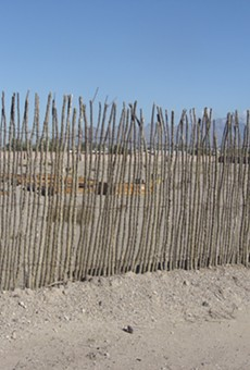 An ocotillo fence takes root as the work continues at the Mission Garden complex.