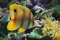 fish_jpg-magnum.jpg