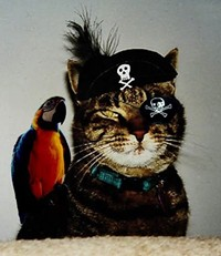 pirate_cat6_jpg-magnum.jpg