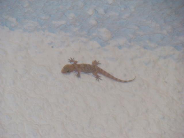 lizard_two.jpg