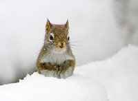 snowphot_45_jpg-magnum.jpg