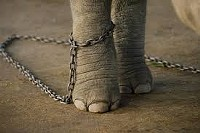 6a73d234_teacher_elephant.jpg