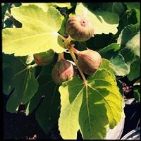 f42e311d_master_gardener.jpg