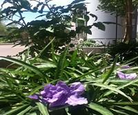 999d8029_plaza_planter_june_2014.jpg