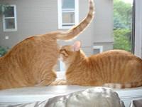 kittylingus_jpg-magnum.jpg