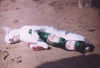 drunkcat_jpg-magnum.jpg