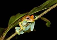 44a7b5ef_frog.jpg