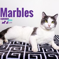 Marbles Needs a Home